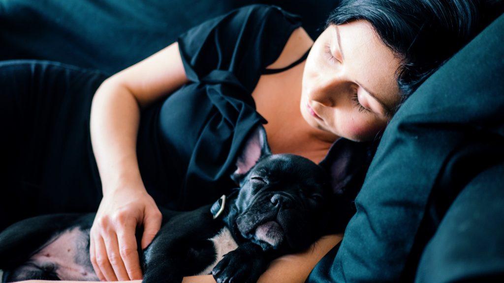 Black Frenchie Cuddle Woman