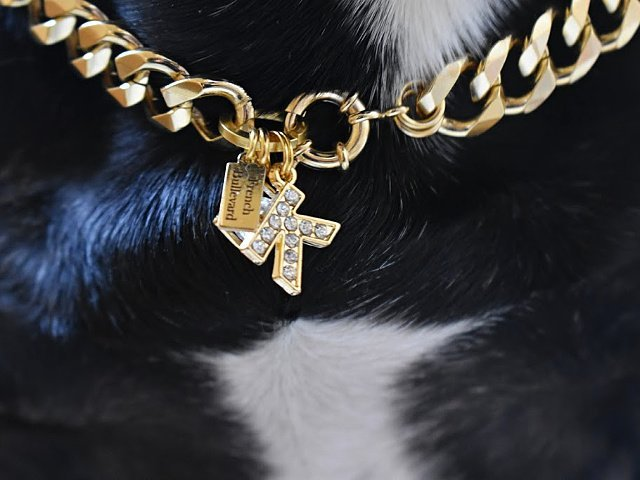 letter pendant gold for dogs