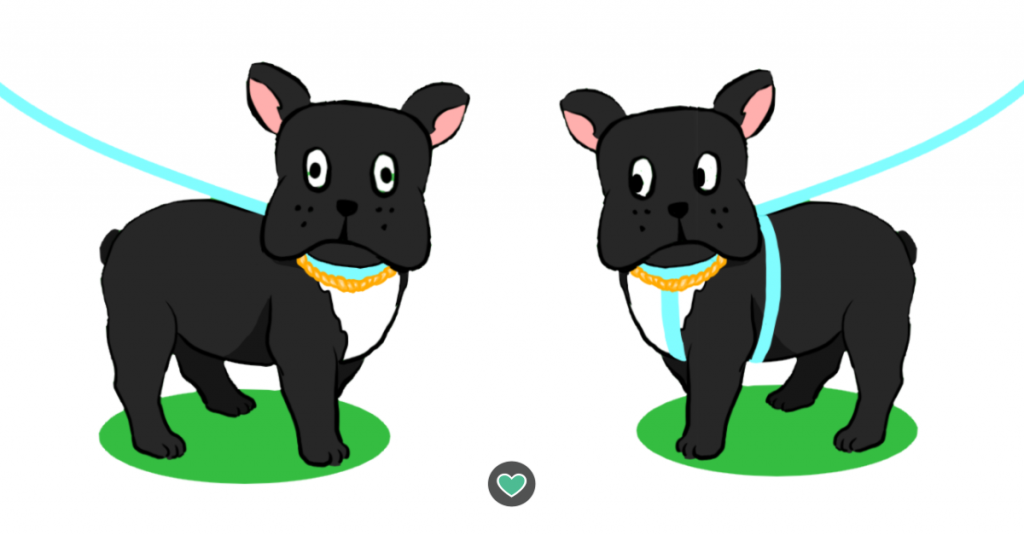 two black frenchies one with collar one with harness drawing
