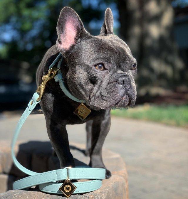 fancy french bulldog leash mint