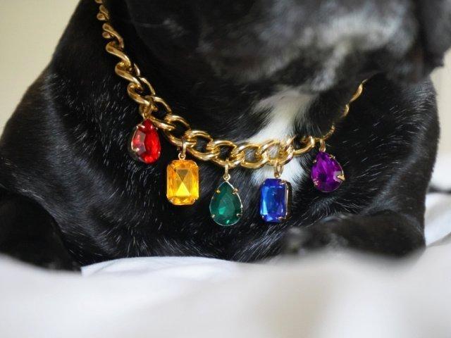 rainbow chain black french bulldog